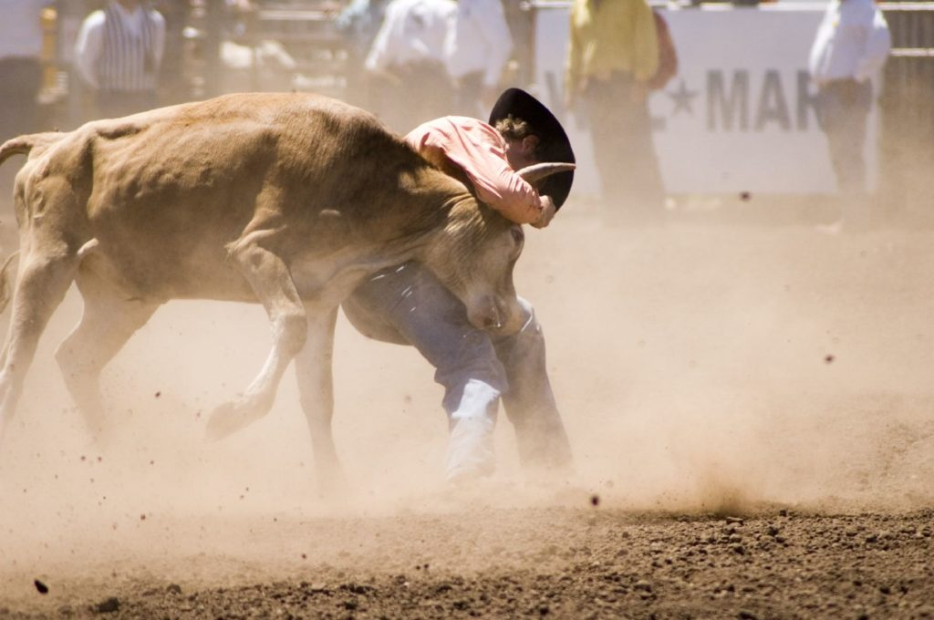 A photo of a cowboy trying to wrestle a steer to the ground.