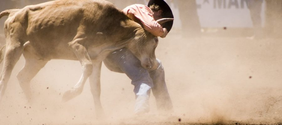 A cowboy trying to wrestle a steer to the ground